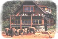 The Ark - Ark on Tree Tops, Aberdare Forest Lodges and country Clubs, Karura Falls, Thompson Falls